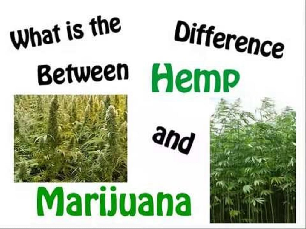 Does Hemp Seed Oil have CBD?